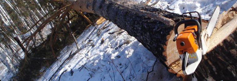 В Кузбассе «черные» лесорубы устроили «конец света» жителям 10 населенных пунктов